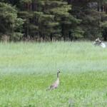 Estonian nature and wildlife